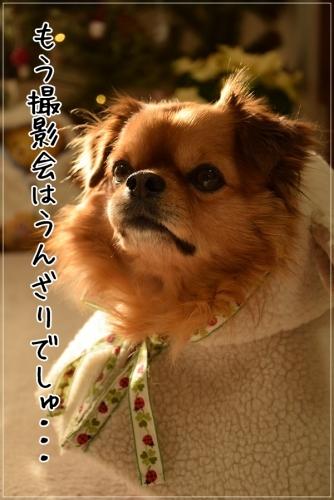 DSC_1016_20141225144608836.jpg