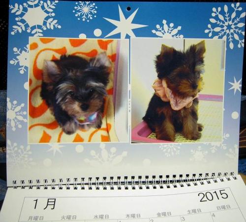 1月の写真