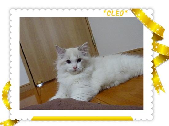 Cクレオ20150604IMG_1644