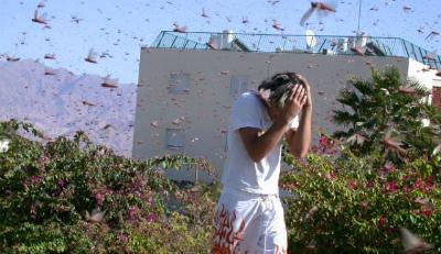 locust-swarm-russia-1.jpg