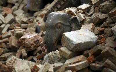 nepal-elephant_3281325k.jpg