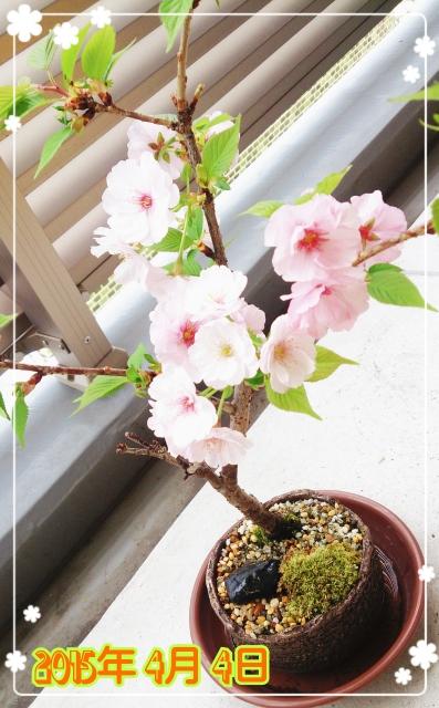 2015-04-04-13-21-16_deco (397x640)