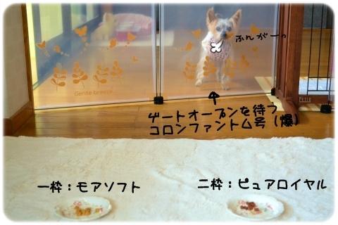 塩VSあっさり (2)
