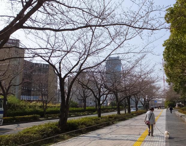 ①桜咲く前