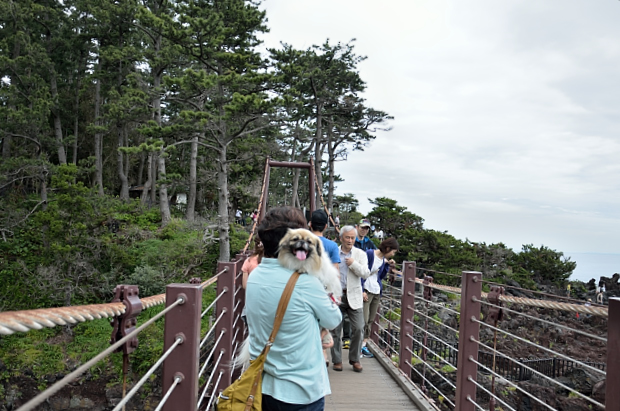 ⑦吊り橋だ