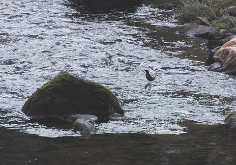 この水辺の鳥は?