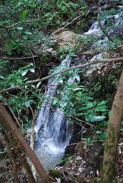 イイギリの側に小滝が