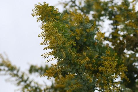 この木の花は?