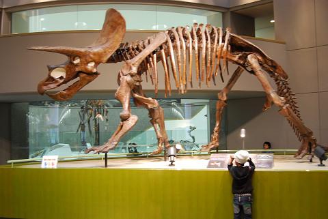 トリケラトプスの骨格