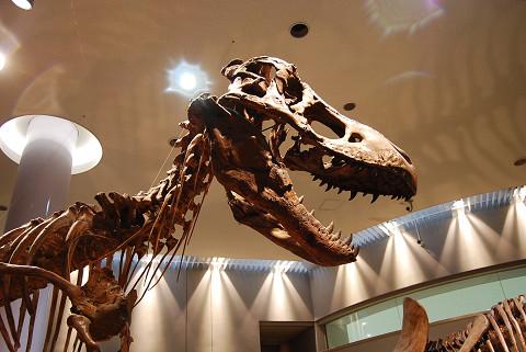 ティラノサウルスの頭の骨
