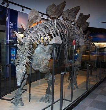 ステゴサウルスの骨格