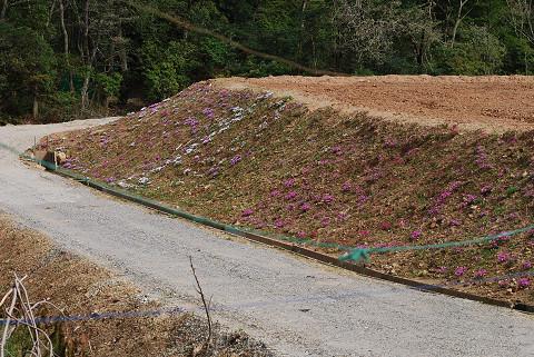 長命湿地南の道路完成