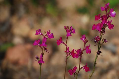 土手の赤い花がきれい