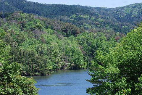 三河湖周辺の新緑が