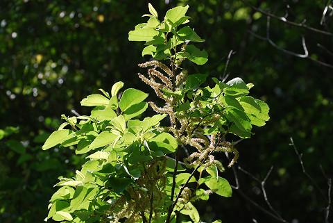 この植物は何?