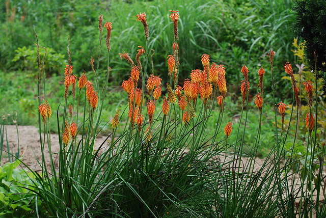 このオレンジ色の花は?