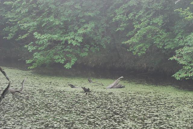 根池の幻想的風景