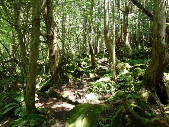 美しい苔生した緑の散策路