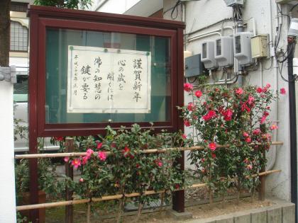 平成27年1月に咲く山茶花