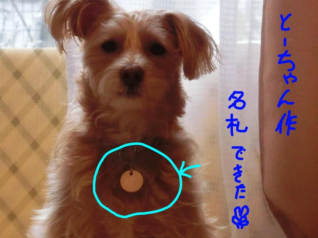 CIMG0512_huda.jpg