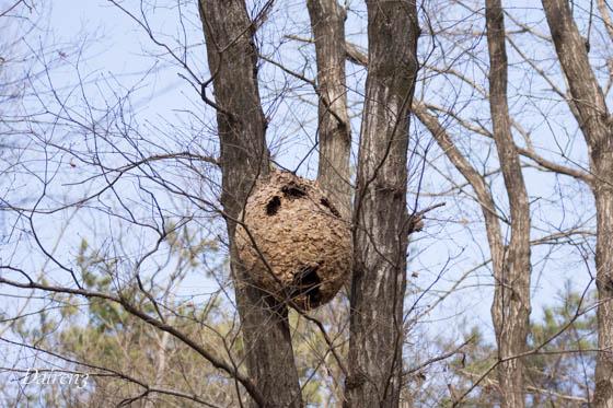 スズメバチの巣?