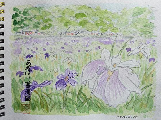 あかぼり菖蒲園