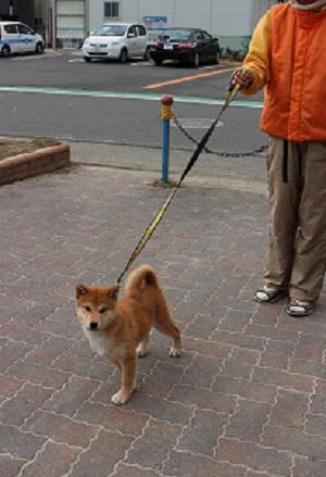 しずくお散歩練習 2014-12-25