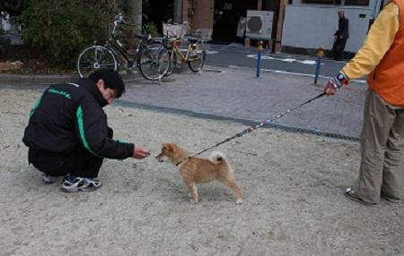 ダイヤお散歩練習 2014-12-25