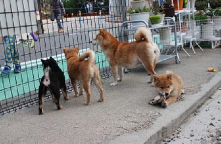 ヨミ姉さんの子犬教育 2015-12-25