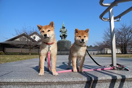 2015-01-05 能楽堂での2頭