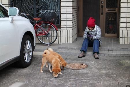 犬の見張り