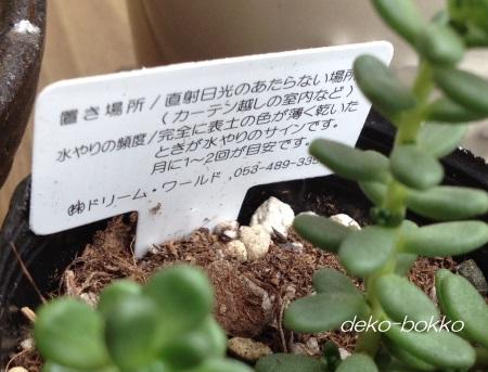 セリア 白花タイトゴメ 注意書き