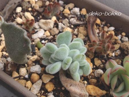 ぶるぐり産 フロスティ 201506