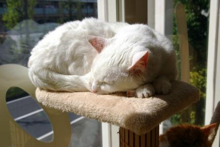 猫部屋寝姿 001