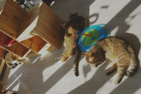 猫部屋寝姿 004
