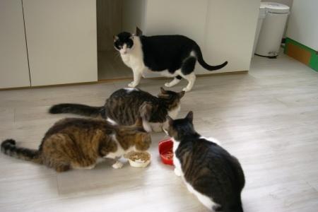猫部屋 003