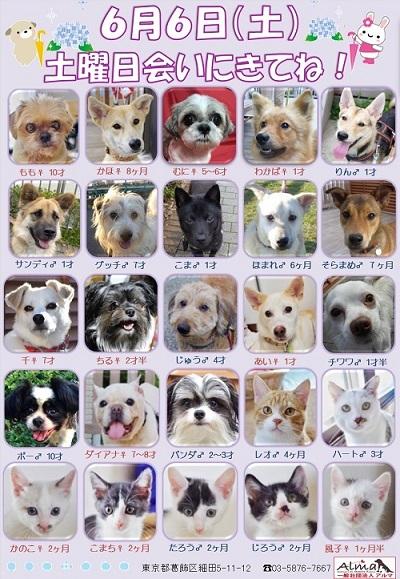 6月6日参加犬猫