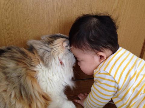 愛娘と愛猫