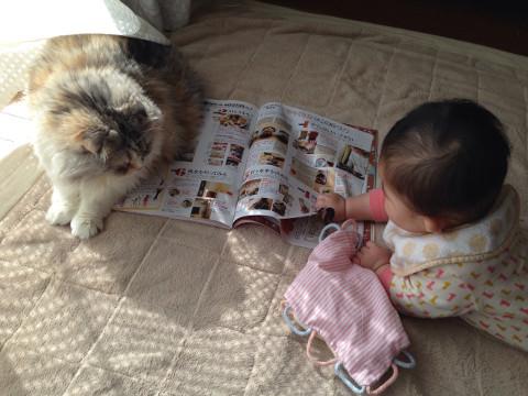 群がる猫と娘