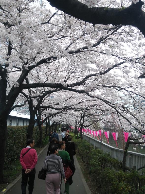 27年桜 1168