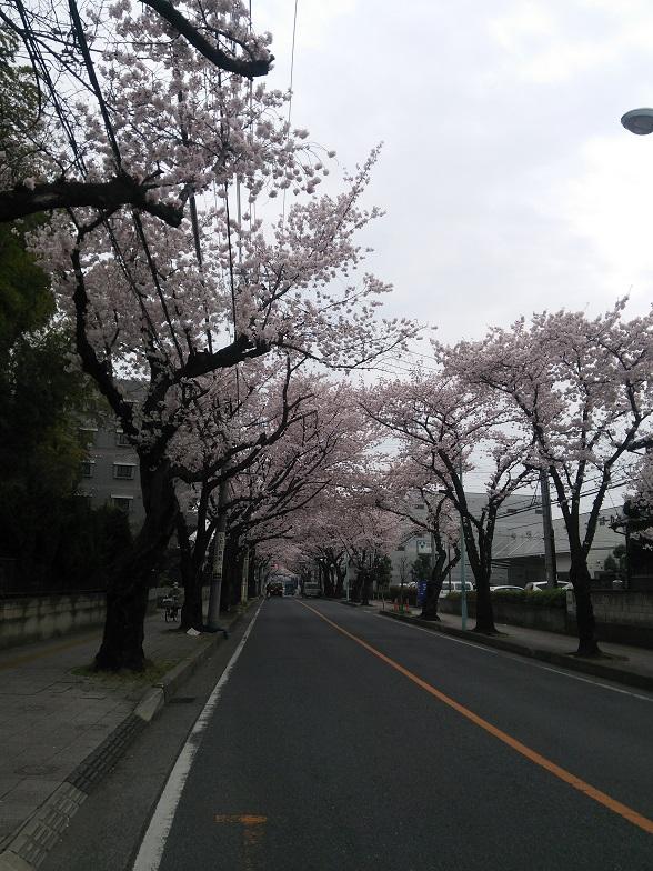 27年桜 1158
