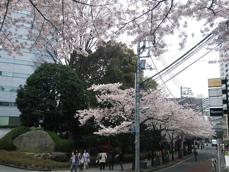 27年桜 1160