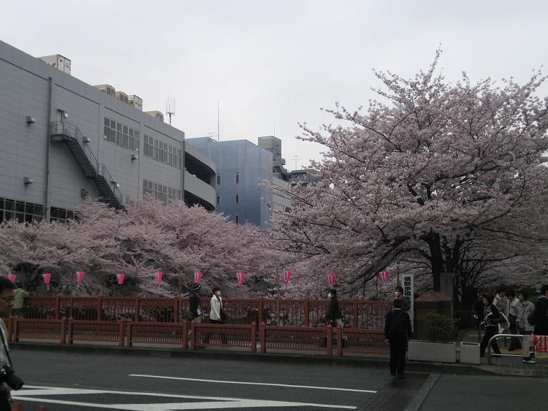 27年桜 1182