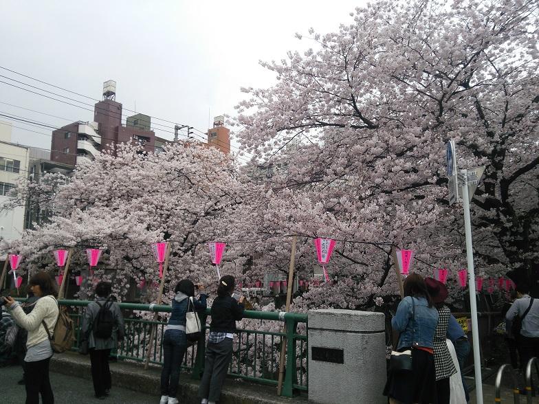 27年桜 1204