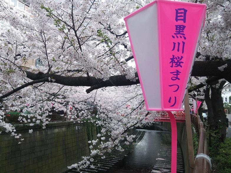 27年桜 1209