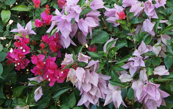 flower 21cm DSC07432