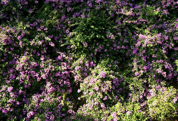 flower 21cm DSC07418