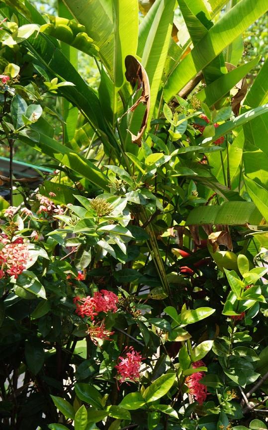 flower 19cm DSC07231