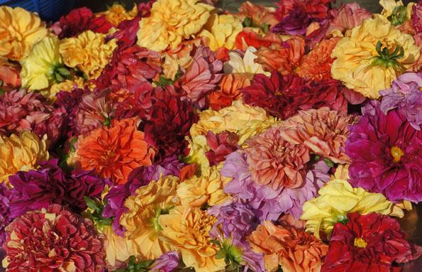 flower 21cm DSC07137