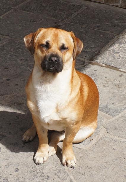 20150603 dogDSC07506